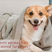 How to remove animal hair from upholstered furniture